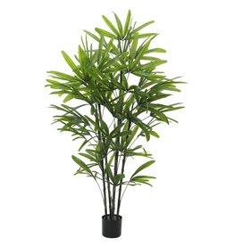 EUROPALMS EUROPALMS Rhapis Palm Tree, 175cm