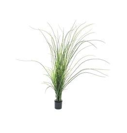 EUROPALMS EUROPALMS Reed grass. 145cm