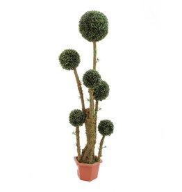 EUROPALMS EUROPALMS Boxball tree, 163cm