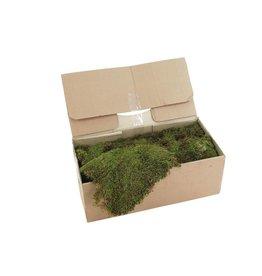 EUROPALMS EUROPALMS Decoration moss, ca. 2kg