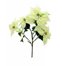 EUROPALMS EUROPALMS Poinsettia bush, cream, 60cm
