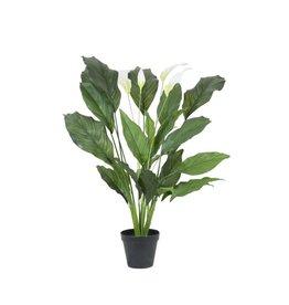 EUROPALMS EUROPALMS Spathiphyllum deluxe, 83cm