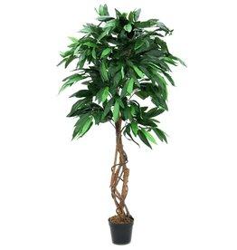EUROPALMS EUROPALMS Jungle tree Mango, 150cm
