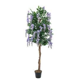 EUROPALMS EUROPALMS Wisteria, purple, 150cm