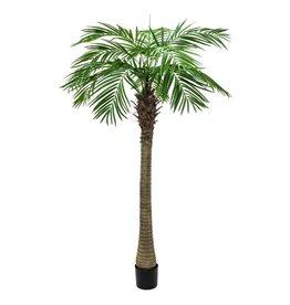 EUROPALMS EUROPALMS Phoenix palm tree luxor, 240cm