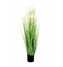 EUROPALMS EUROPALMS Star grass, 105cm
