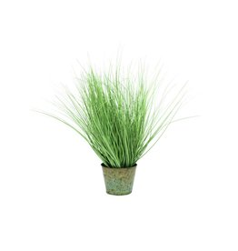 EUROPALMS EUROPALMS Ornamental grass, 65cm