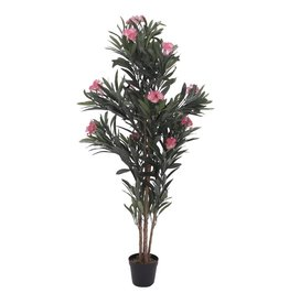 EUROPALMS EUROPALMS Oleander tree, pink, 150 cm