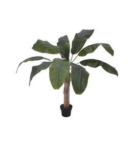 EUROPALMS EUROPALMS Banana tree, 100cm