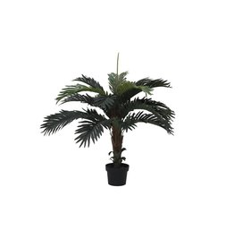 EUROPALMS EUROPALMS Coconut palm, 90cm