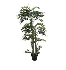EUROPALMS EUROPALMS Phoenix palm with multiple trunk, 170cm