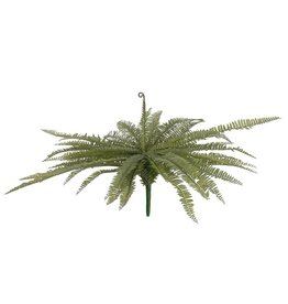 EUROPALMS EUROPALMS Boston fern, green, 70cm