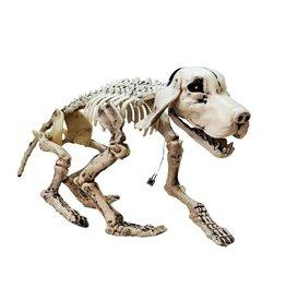 EUROPALMS EUROPALMS Halloween Skeleton Dog, 71x40x25cm