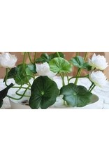 Lotuszaden voor kleine lotusbloemen