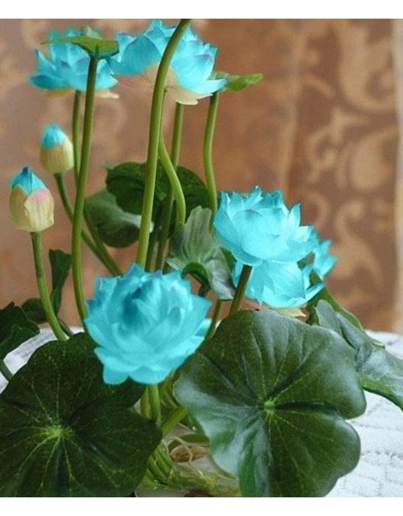 Lotus seeds for small lotus flowers