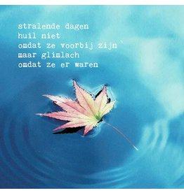 ZintenZ postcard Stralende dagen huil niet