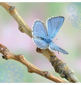 ZintenZ postkaart Vlinder