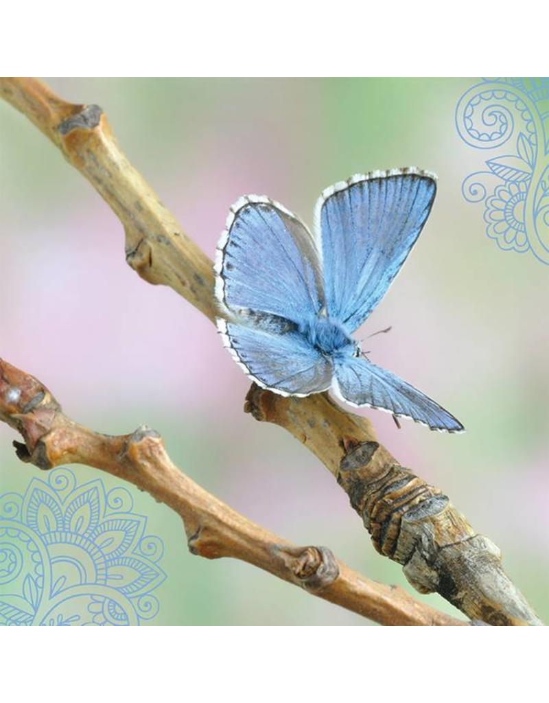 ZintenZ postcard Butterfly