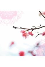 ZintenZ postcard Blossom