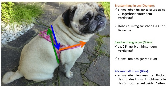 Exklusives Hundezubehor Im Set Zum Vorteilspreis Mein Mops