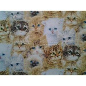 Baumwolle Katzen