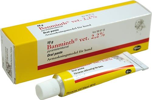 Banminth Hund