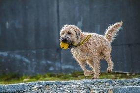 Wie hältst Du die Gelenke Deines Hundes gesund?