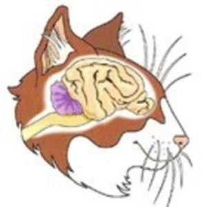 Brains - Senior