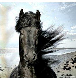 Alu Plaat Paard 25x25cm. geborsteld uv