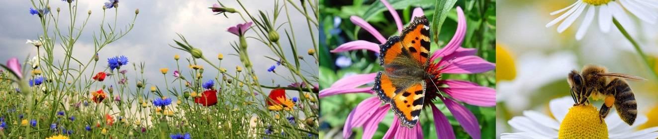 Actie voor bijen en vlinders!