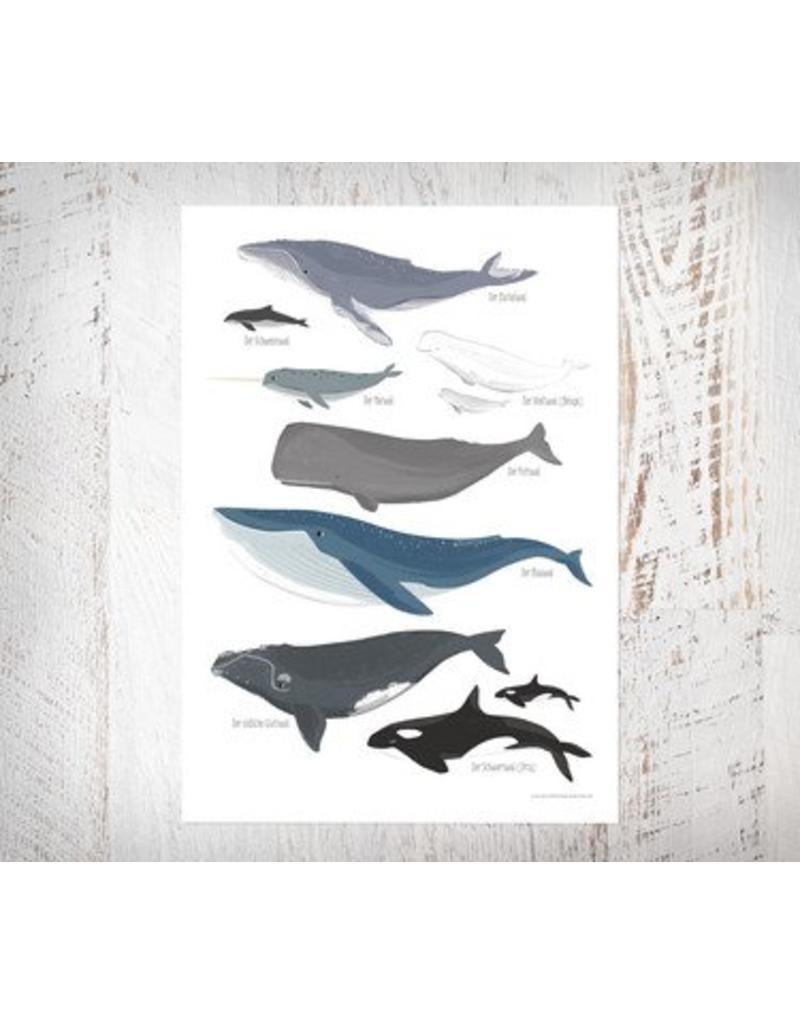Vierundfünfzig Illustration Wale Poster Din A3