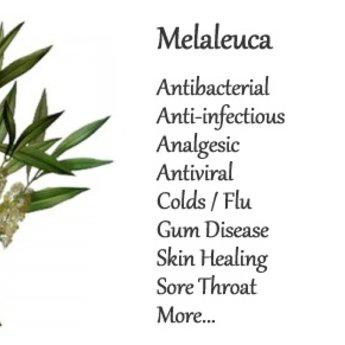 doTERRA Melaleuca Essentiële Olie enkelvoudige olie