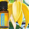 doTERRA Ylang Ylang essential oil