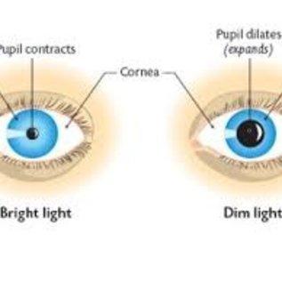 Westmed Praxis Diagnoselampje