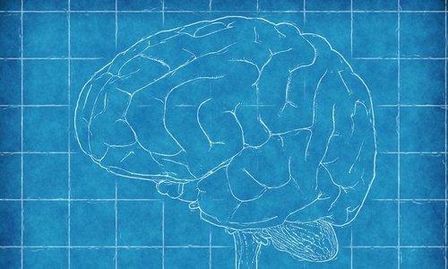 Mannen hersenen blijken qua emotie hetzelfde als  bij vrouwen
