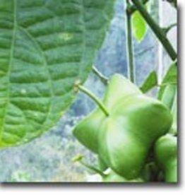 B-Organic Sacha Inchi