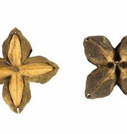 B-Organic Sacha Inchi zaden