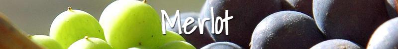 Merlot Wijnmarkt