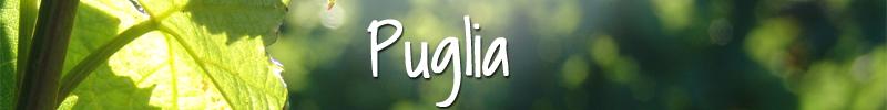 Puglia wijnen Wijnmarkt