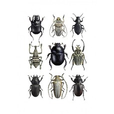 Liljebergs Beetles Black & White