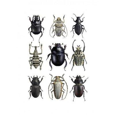 Liljebergs Liljebergs Beetles Black & White