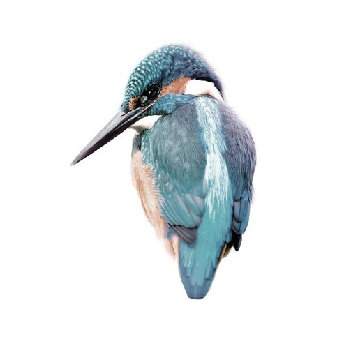 KEK Amsterdam Kingfisher