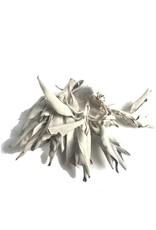 Weißer Salbei (Salvia apiana)