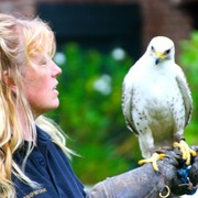 Roofvogel demonstratie