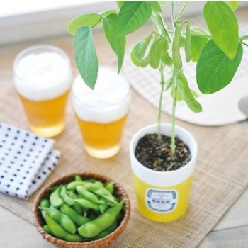 Noted Edamame Growing Kit