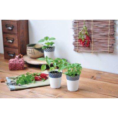 Yakumi Japanese Herbs