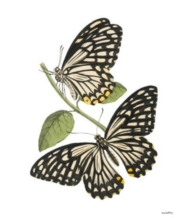 Vanilla Fly Retro Print | BUTTERFLIES