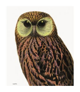 Vanilla Fly Poster | GREEN EYED OWL | 30x40