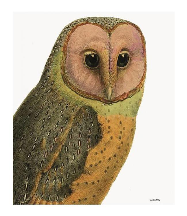 Vanilla Fly Vintage poster | RED FACED OWL