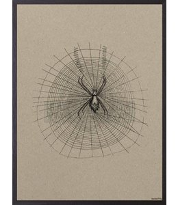Vanilla Fly Poster   SPIDER CARDBOARD   20x25